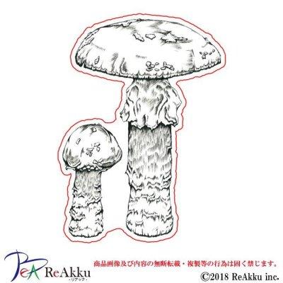画像1: ベニテングダケ-原良輔