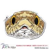 シシバナヘビ-Dsuke