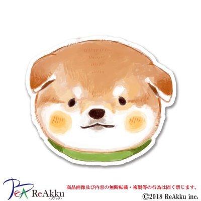 画像1: 子茶柴のお顔-fumika